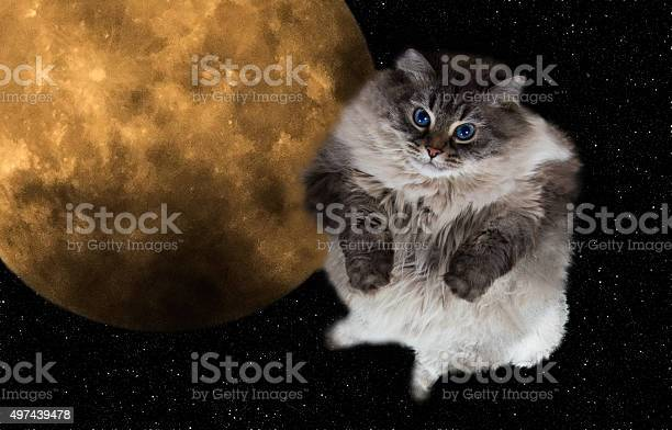 Funny cat flying in the night sky picture id497439478?b=1&k=6&m=497439478&s=612x612&h=kabd nwvsy5mt7gymzxcpqaqnu8cynwt65vijyjtwoy=