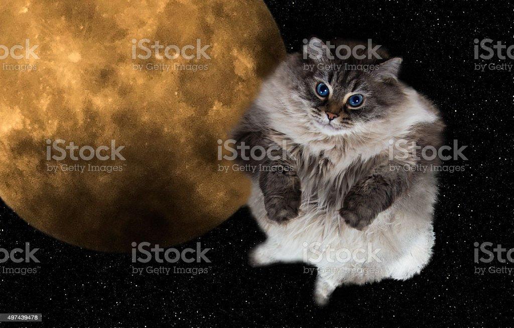 funny cat volant dans le ciel nocturne - Photo