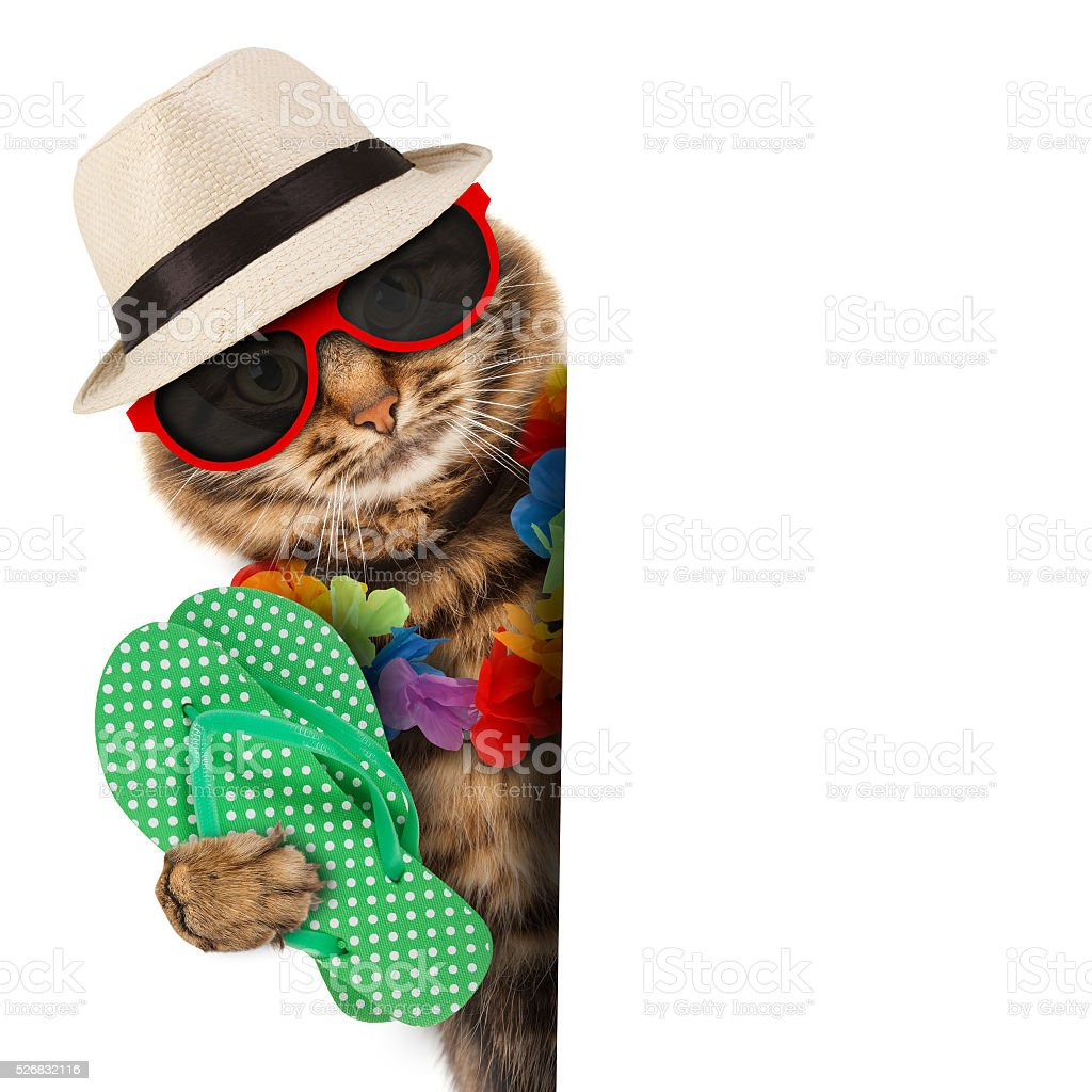Funny cat going on vacation stock photo