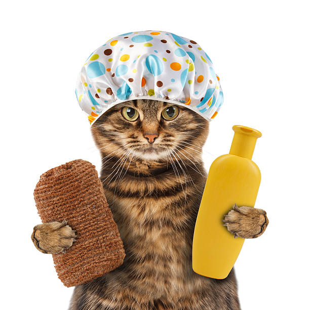 Funny cat going to washing picture id588977820?b=1&k=6&m=588977820&s=612x612&w=0&h=gbbumngenmzzg73ip9dc7dpzylshisfs64fqjsvvymq=