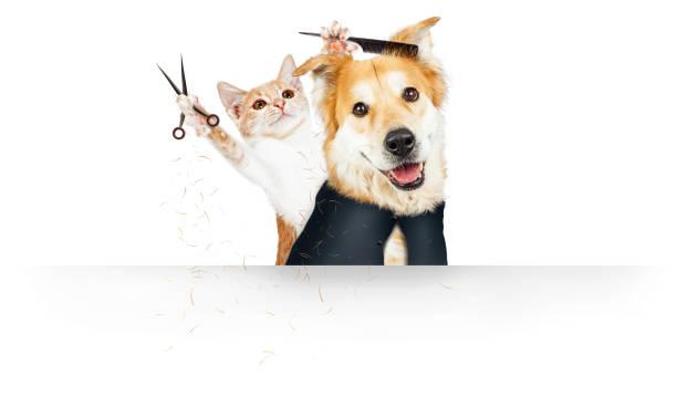 Funny cat grooming dog web banner picture id1210859805?b=1&k=6&m=1210859805&s=612x612&w=0&h=dnefq0mzyfdr53r ugexlglkbikrqfpjl8gm qdh0uk=
