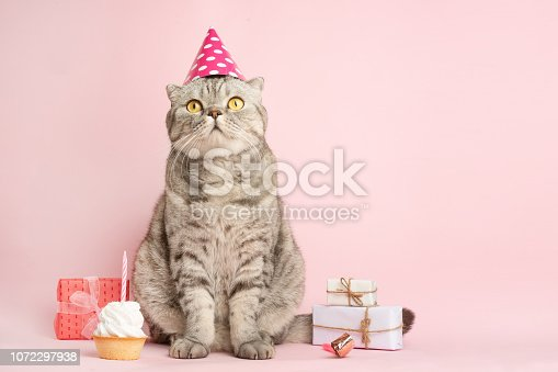 funny cat in a cap celebrates birthday, on a pink background