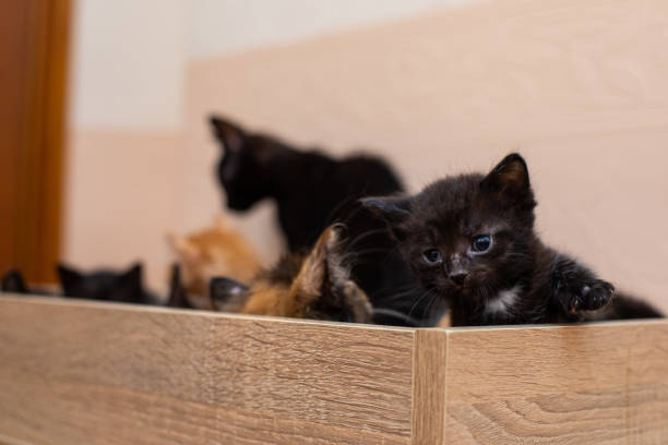 gato gracioso en un hogar acogedor - couch potato refrán en inglés fotografías e imágenes de stock