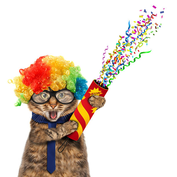 funny cat in costume clown. - anniversary stock photos and pictures