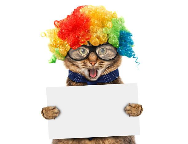 Funny cat in costume clown picture id526835114?b=1&k=6&m=526835114&s=612x612&w=0&h=zfvtsmztctxobthjeb 7mtek8v nserli2 7wbt7jpy=