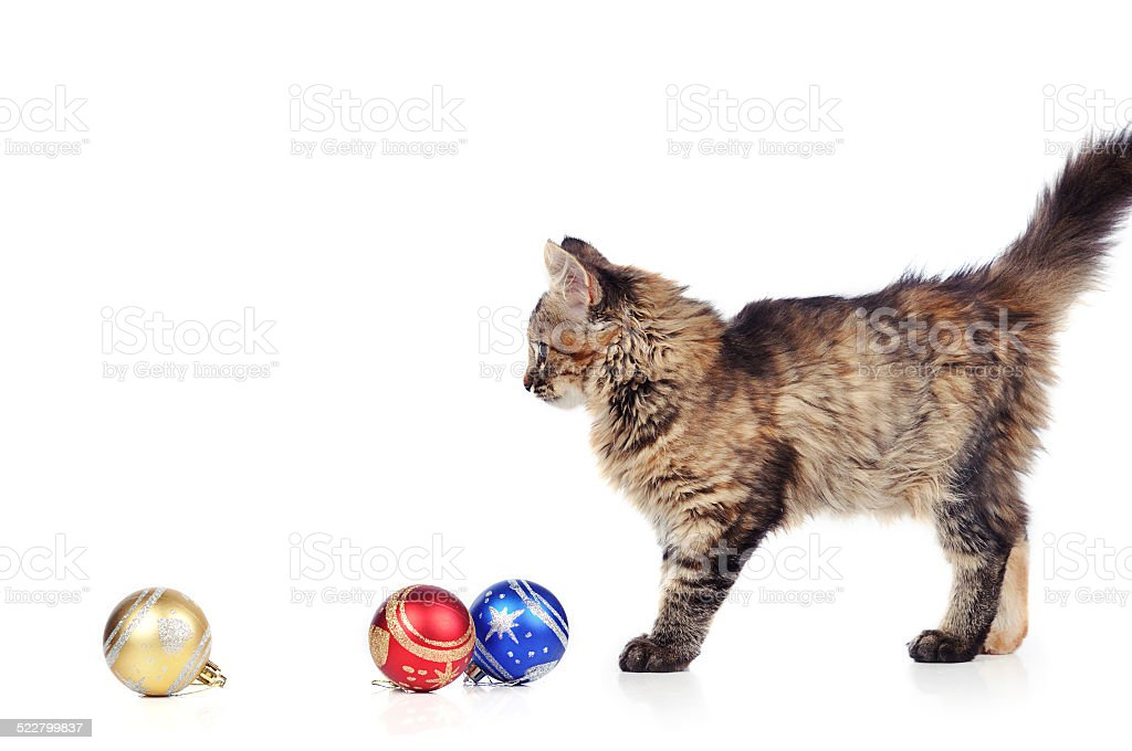 Funny cat in Santa Claus cap isolated over white stock photo