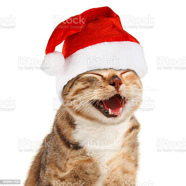 Funny cat in santa claus red hat on white background picture id588981936?b=1&k=6&m=588981936&s=612x612&h=unvumjjhp0psyqf4vf0n78clyi494tvxwx1krghw ga=