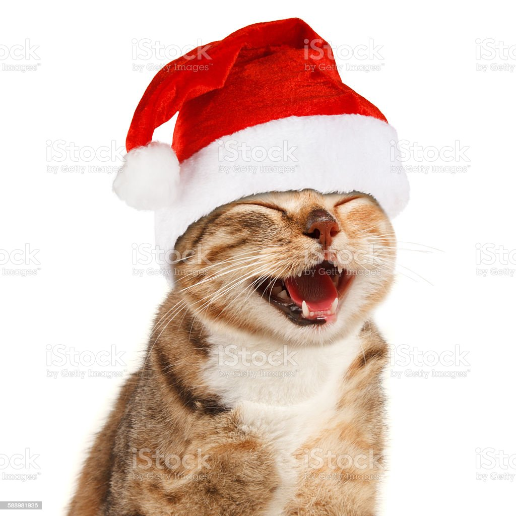 Funny cat in Santa Claus red hat on white background stock photo