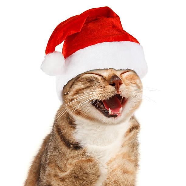 funny cat in santa claus red hat on white background - katze weihnachten stock-fotos und bilder