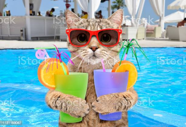 Funny cat in sunglasses with cocktails in his paws on background pool picture id1131169067?b=1&k=6&m=1131169067&s=612x612&h=p y5rh ztk64jcdcdlxi4ctv medl6yyuljgb58xmxe=