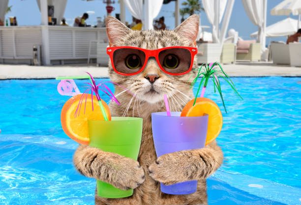 Funny cat in sunglasses with cocktails in his paws on background pool picture id1131169067?b=1&k=6&m=1131169067&s=612x612&w=0&h=r fofsar3zx7yth6vzozr01rnilihjx5ot4nwz igpo=