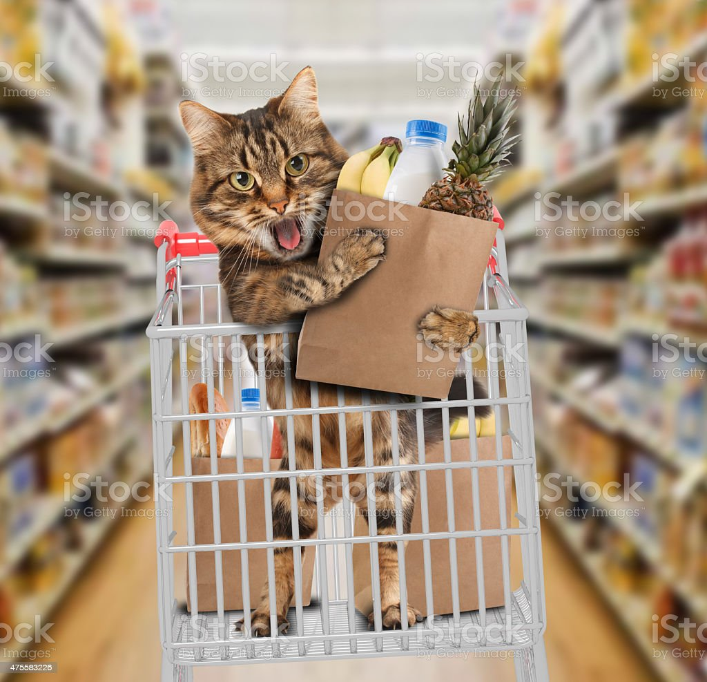 Funny cat in the store stock photo