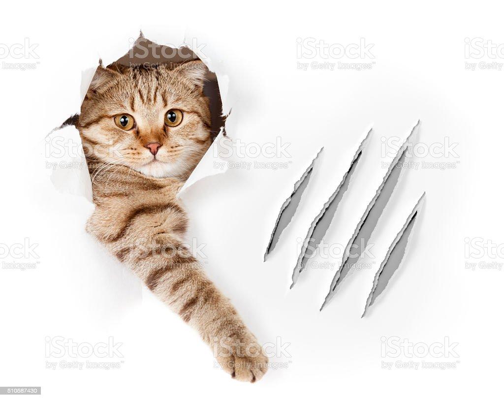 面白い猫の壁紙ホールにクロウの傷絶縁型 いたずらのストックフォトや画像を多数ご用意 Istock