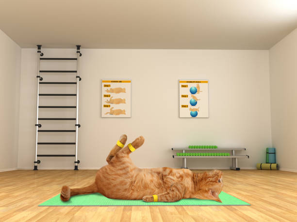 Funny cat is doing exercise scissor crunches fitness club picture id836142792?b=1&k=6&m=836142792&s=612x612&w=0&h=fpwipa1oispvt g1nrps8t2sye2w6ajolfy5dt jqvg=