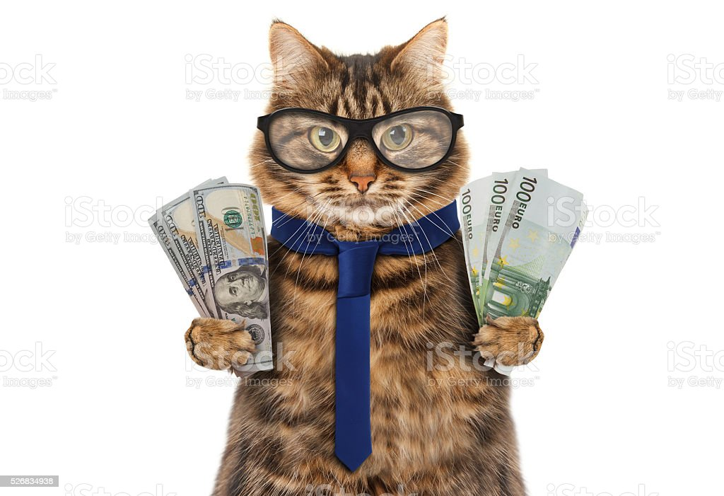 Funny cat is holding banknotes of Dollar and Euro. stock photo