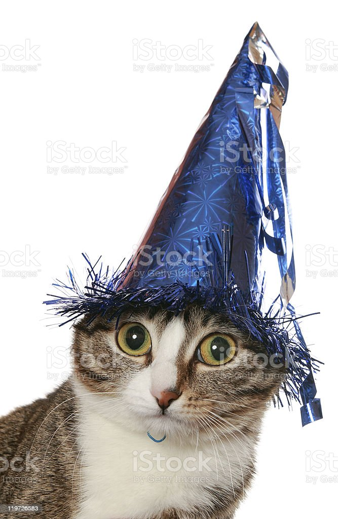 Funny cat is in a festive hat stock photo