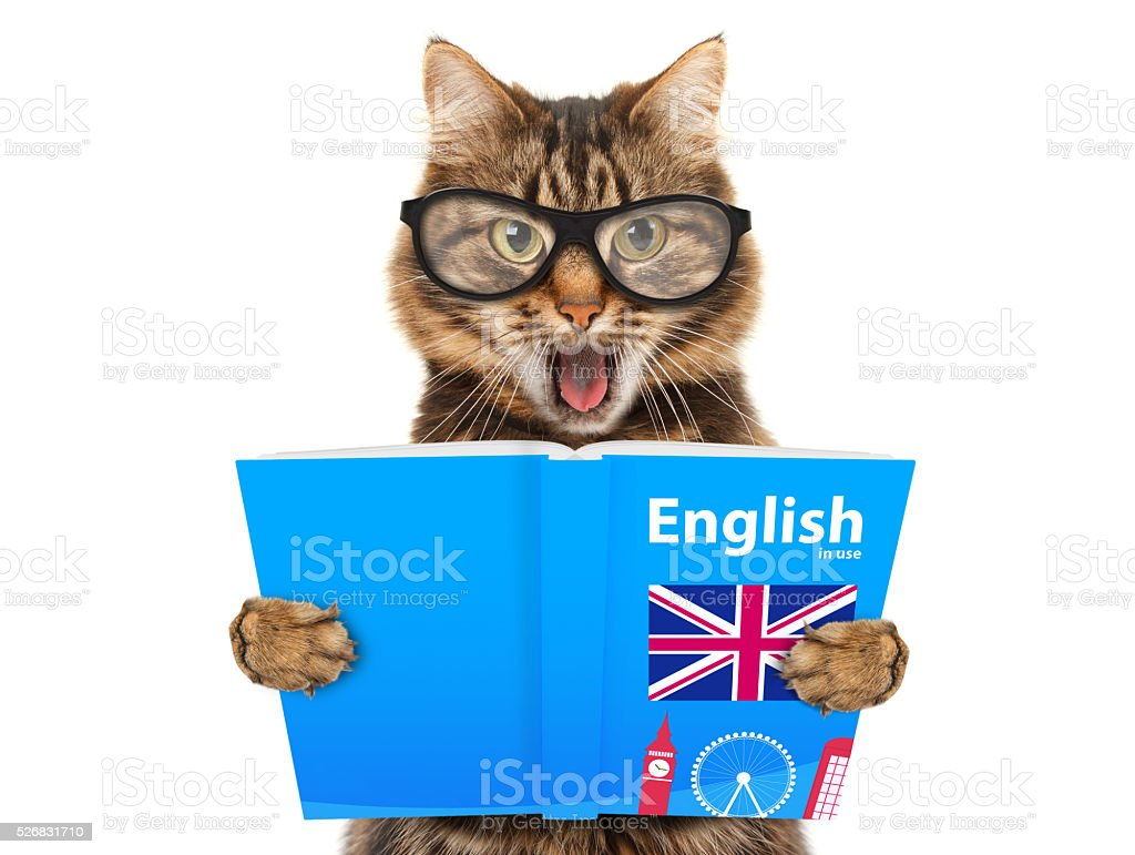 Funny cat is learning English. Cat reading a book stock photo