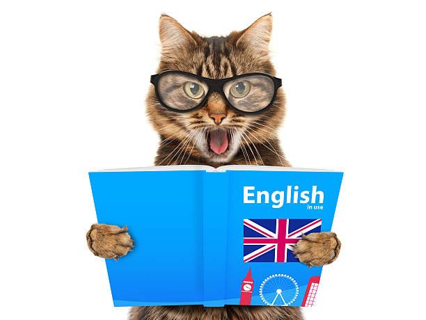 lustige katze lernen englisch. katze beim buchlesen - schöne englische wörter stock-fotos und bilder