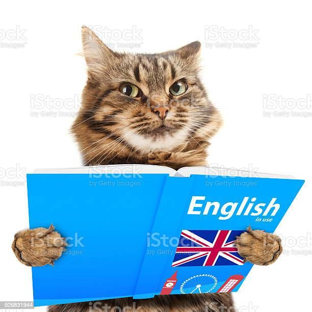 lustige katze lernen englisch katze beim buchlesen