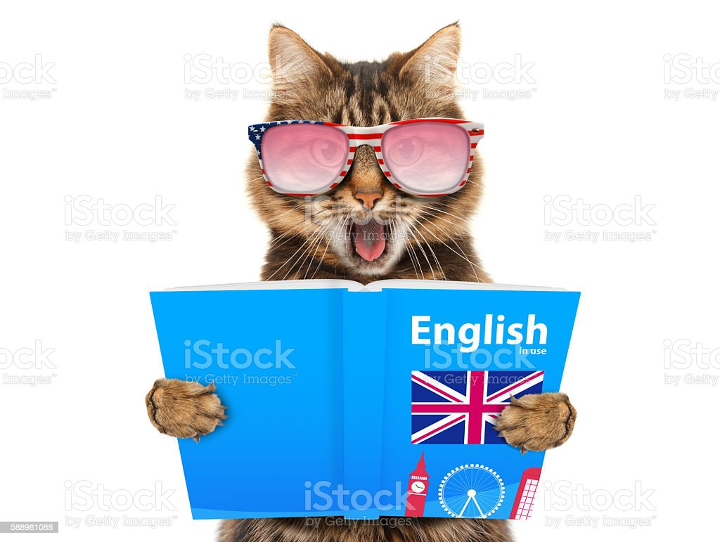 Funny cat is learning English. Cat reading a book. stock photo
