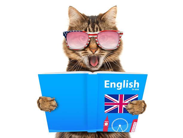 funny cat is learning english. cat reading a book. - schöne englische wörter stock-fotos und bilder