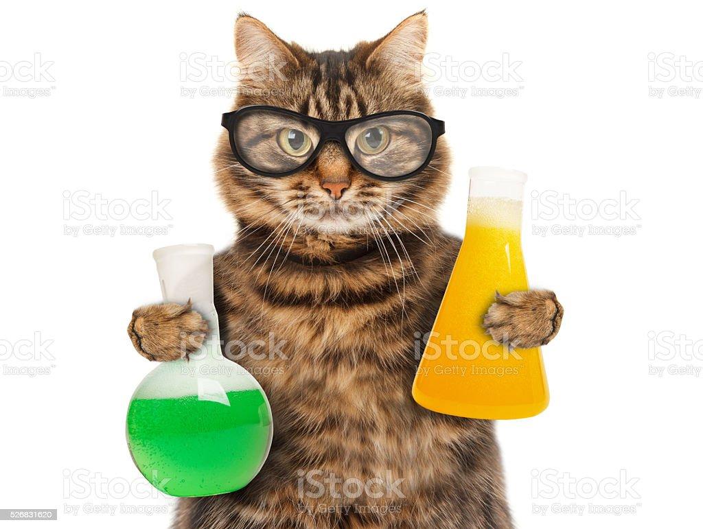 dr244le chat 224 233tudier la chimie � photos et plus dimages