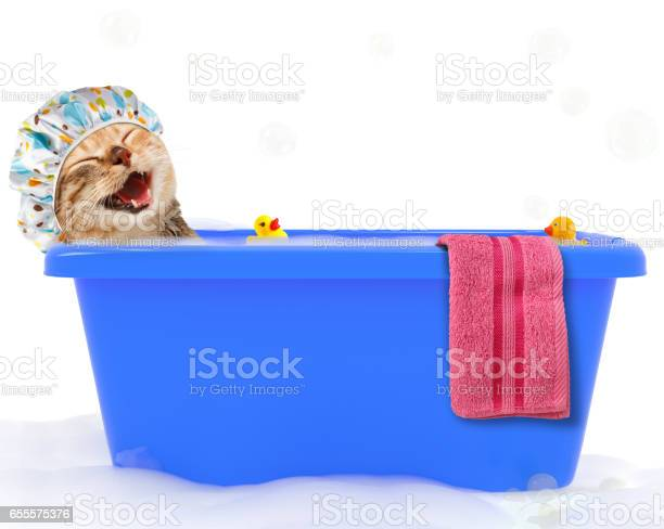 Photo of Funny cat is taking a bath in a colorful bathtub with toy duck.