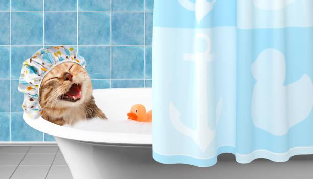 Funny chat prend un bain avec le canard jouet. - Photo