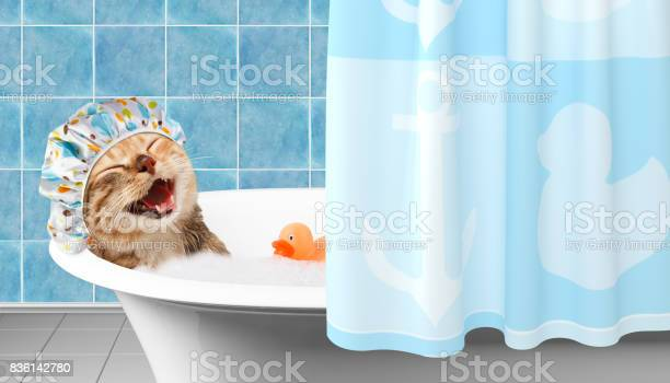 Photo of Funny cat is taking a bath with toy duck.