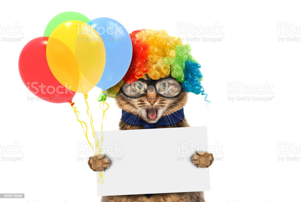Funny cat is wearing a clown's costume and holding balloons. White label for text. stock photo