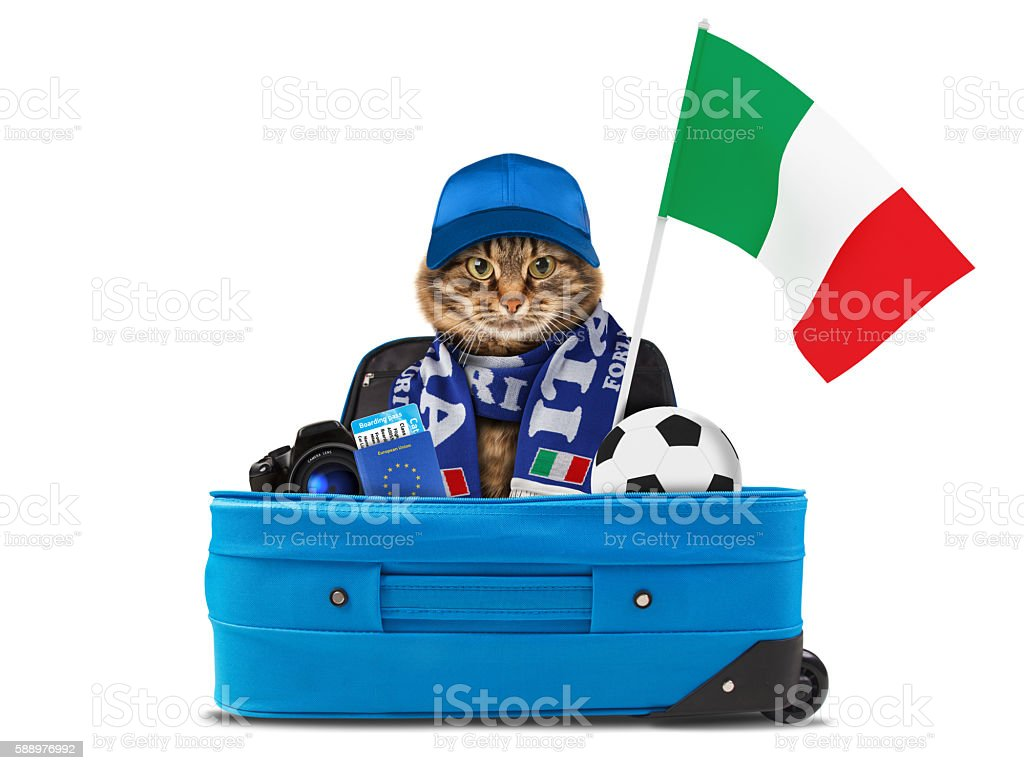 Funny cat is wearing a football scarf of Italy. stock photo