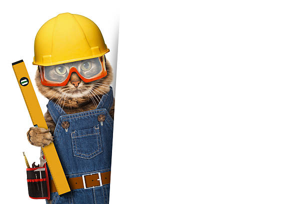 Funny cat is wearing a suit of builder picture id588978344?b=1&k=6&m=588978344&s=612x612&w=0&h=ghorstl11fji73zylqyf6sqk6i9evgr8ordvoipyy4i=