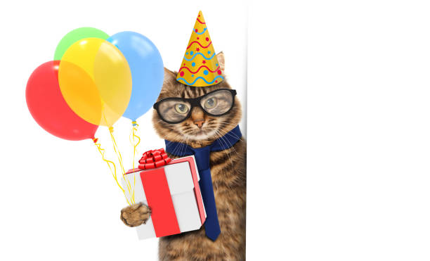 Funny cat is wearing a suit of clown and holding balloons and gift picture id655575390?b=1&k=6&m=655575390&s=612x612&w=0&h=rljbgygwnkufhftw1fjkdlttuo168iumopkzna1ou9k=