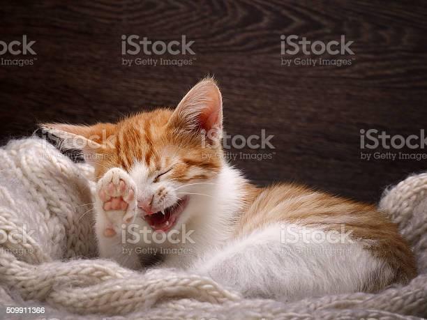 Funny cat laughing picture id509911366?b=1&k=6&m=509911366&s=612x612&h=xnlxvpkhx4joivsxmufqexc xxhlwq mkknzqw9a6jg=
