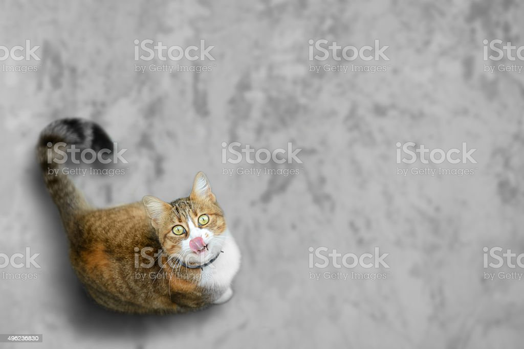Funny cat looks for yummy stock photo