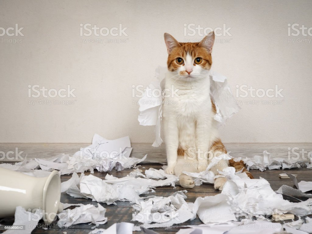 Funny cat made a mess, tore up paper стоковое фото