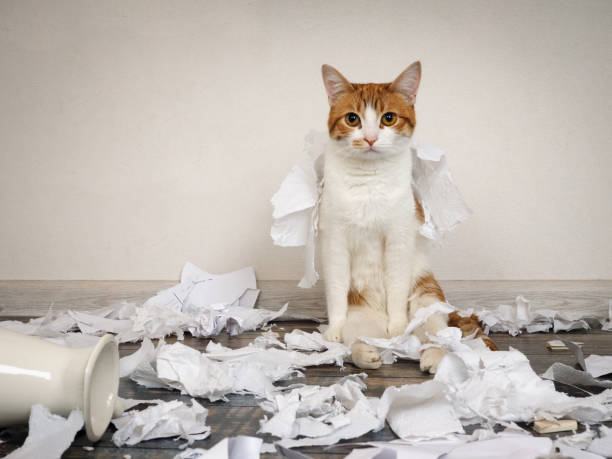 Funny cat made a mess, tore up paper stock photo