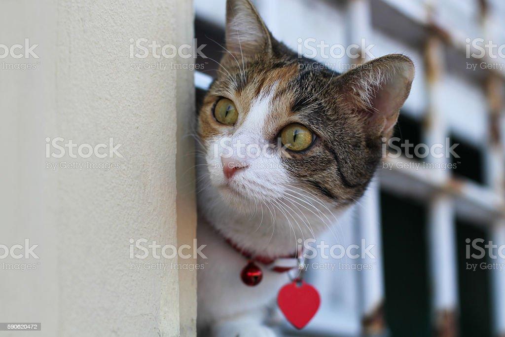 Funny cat on the windowsill. Kitten peeks from behind bars stock photo