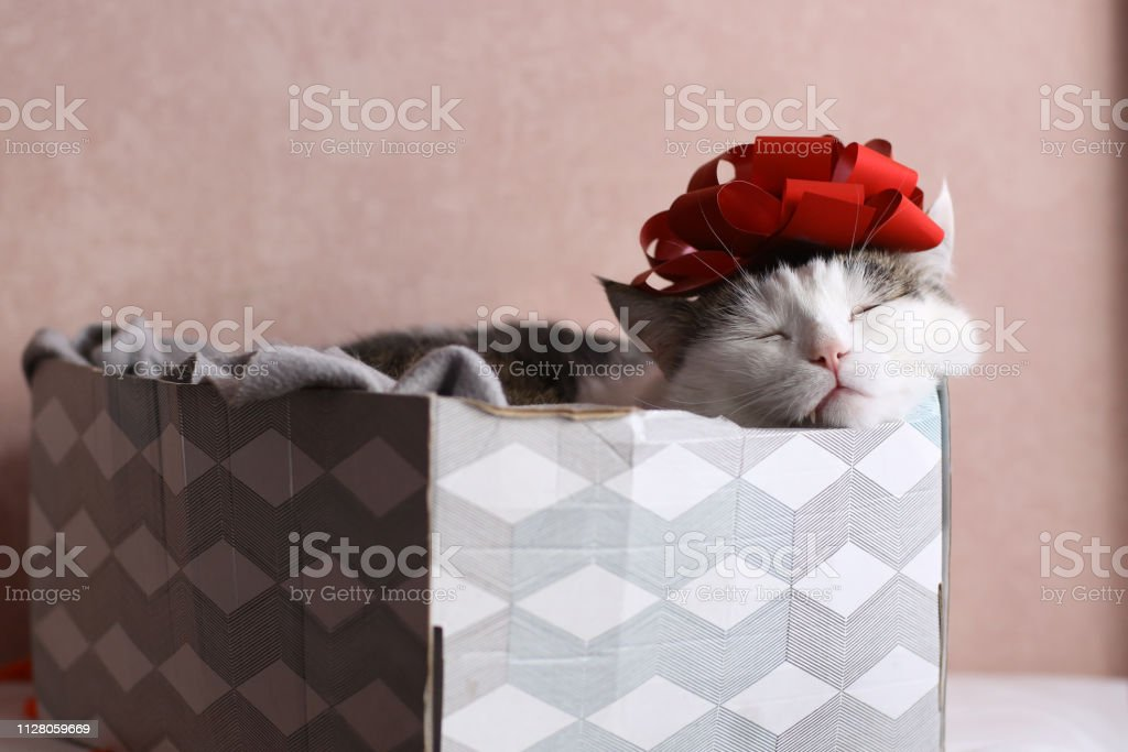 funny cat photo sleeping in gift box with red bow on head stock photo