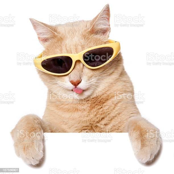 Funny cat picture id157336901?b=1&k=6&m=157336901&s=612x612&h=an8uz5tltih jktlg ef0rehjvcezlwhn3onzngkje8=