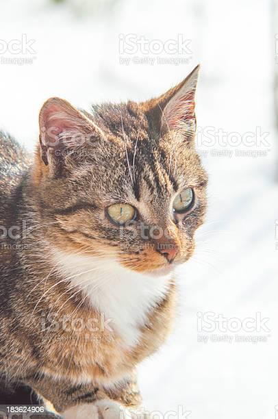 Funny cat picture id183624906?b=1&k=6&m=183624906&s=612x612&h=fdpasmmr203lioo5qqgmhenlnbh7gsswqkvzsfhq9xs=