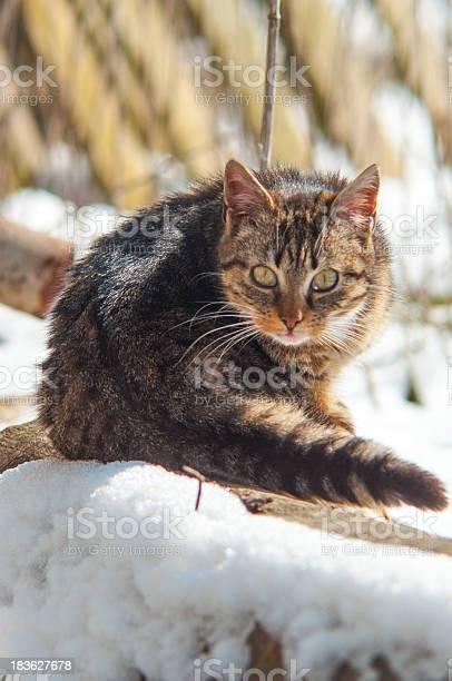 Funny cat picture id183627678?b=1&k=6&m=183627678&s=612x612&h=mbcywoptrbnnd5jmu114xyknbuaaab5usehinp1l244=