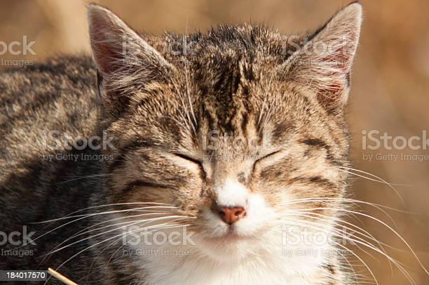 Funny cat picture id184017570?b=1&k=6&m=184017570&s=612x612&h=ypt8rht aeipnkn6htyyytwfghrjtodg8rjxg0 lea4=