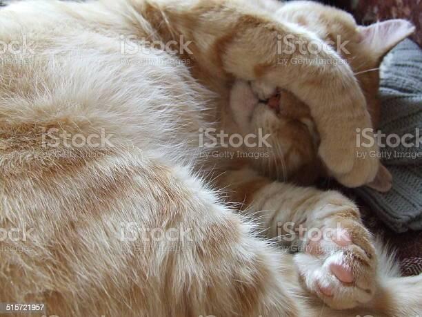 Funny cat picture id515721957?b=1&k=6&m=515721957&s=612x612&h=6nt95mmr1j6dndi7r5fcywicvvh9dmpobi0qyxl7gky=