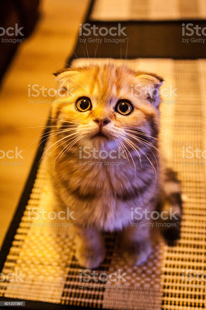 Funny cat playing stock photo