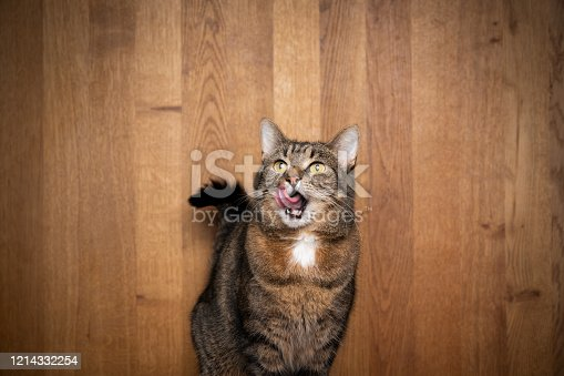hungry tabby cat licking over lips with open mouth in front of wooden background with copy space