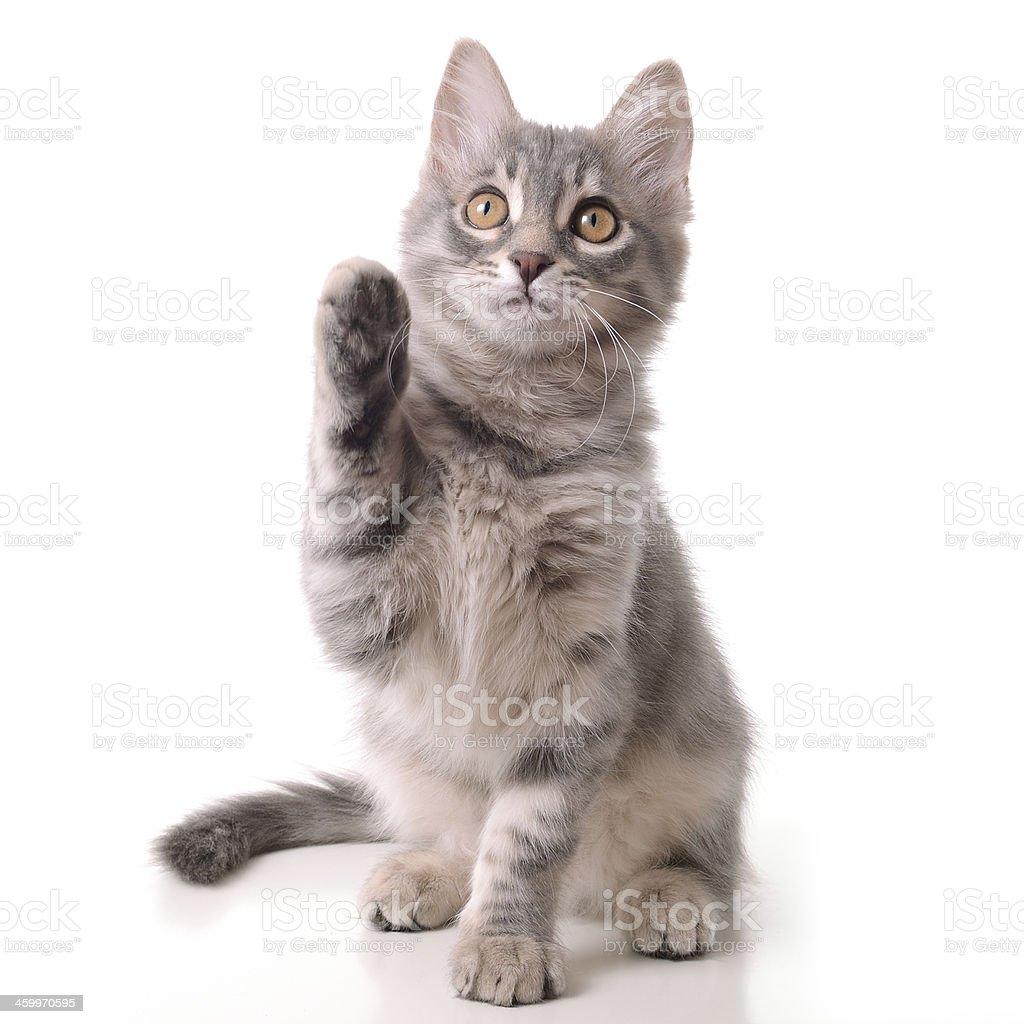 Funny cat says hello stock photo