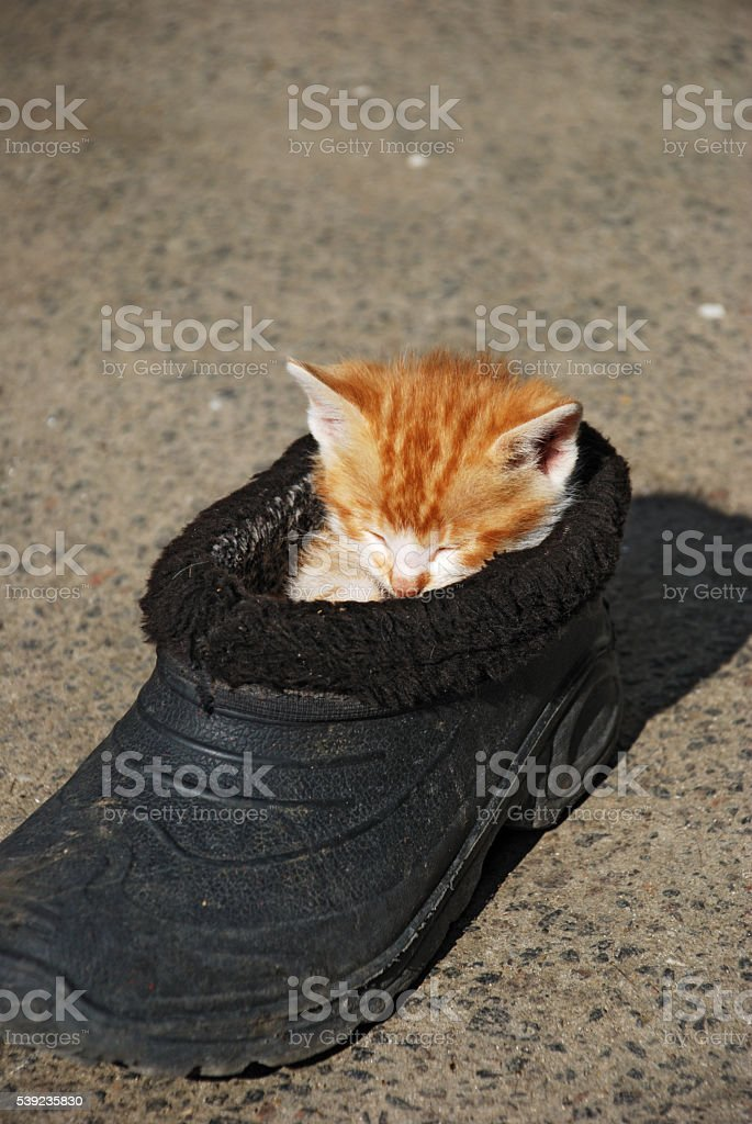 Funny cat sleep in old shoe royalty-free stock photo