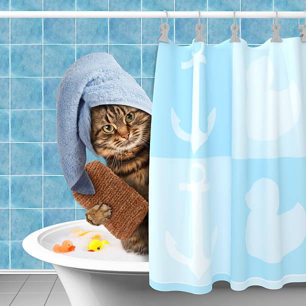 Funny cat taking a bath picture id526831460?b=1&k=6&m=526831460&s=612x612&w=0&h=cp0gae flnfszyvjrveg9z4lxgfoqzw fegao4knqme=