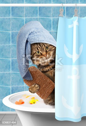 lustige katze nimmt ein bad stock fotografie und mehr. Black Bedroom Furniture Sets. Home Design Ideas